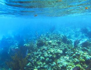 reef when snorkeling.jpg